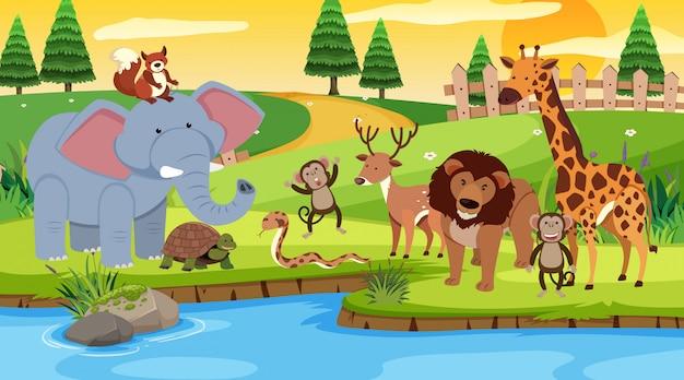 Scène avec de nombreux animaux debout près de la rivière
