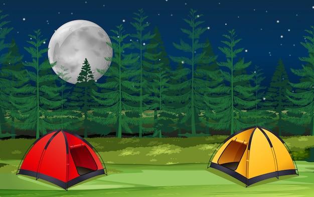 Scène de nuit dans la forêt