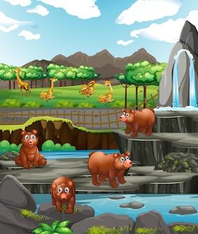 Scène avec des ours et des girafes au zoo