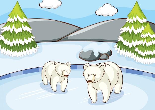 Scène avec des ours polaires en hiver