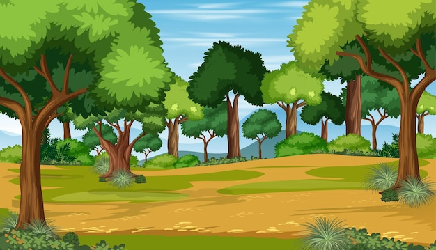 Scène de paysage de forêt nature vierge avec de nombreux arbres