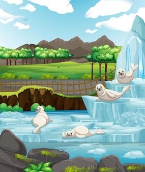 Scène avec des phoques blancs sur glace
