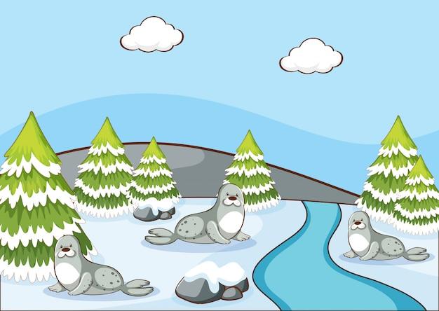 Scène avec des phoques en hiver