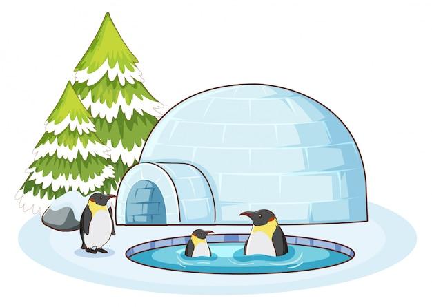 Scène avec des pingouins dans la neige