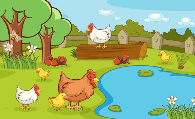 Scène avec des poulets dans le parc