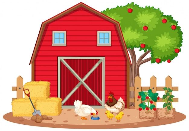 Scène avec des poulets et des légumes à la ferme