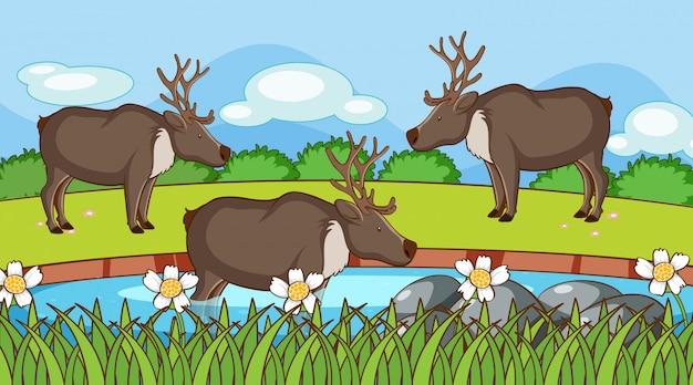 Scène avec des rennes dans le jardin