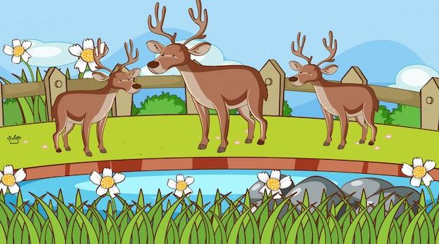 Scène avec des rennes dans le parc