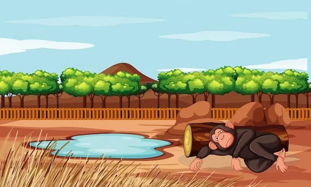Scène avec le singe au zoo