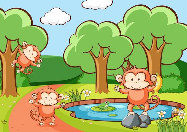 Scène avec des singes en forêt