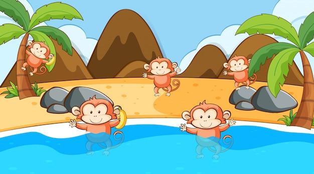 Scène avec des singes à la mer