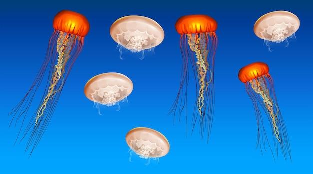 Scène sous-marine avec des méduses nageant