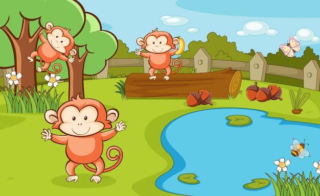 Scène avec trois singes dans le parc