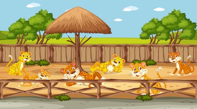 Scène de zoo avec de nombreux tigres derrière la clôture