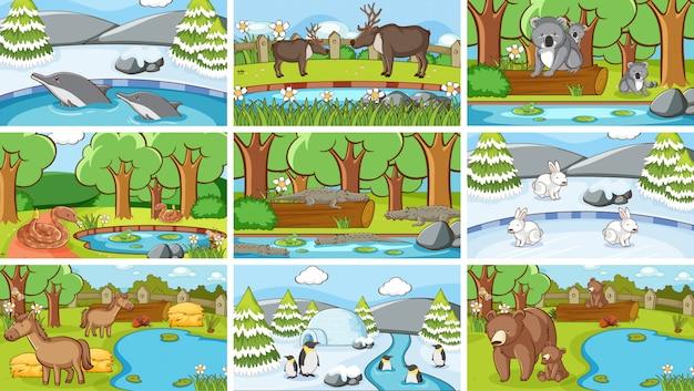 Scènes de fond d'animaux à l'état sauvage