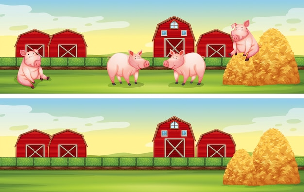 Scènes de fond avec des cochons à la ferme