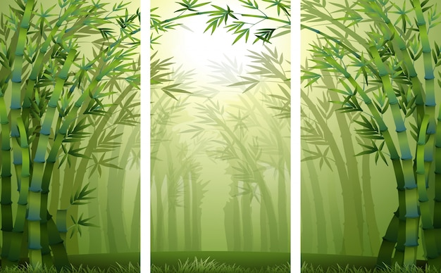 Scènes de forêt de bambou avec brume