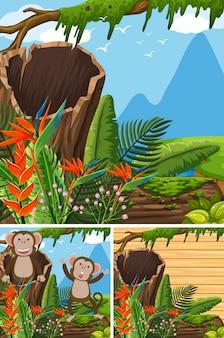 Scènes avec des singes dans la forêt