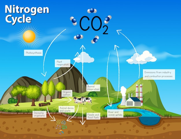 Science cycle azote co2