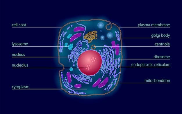 Science de l'éducation de la structure cellulaire animale humaine