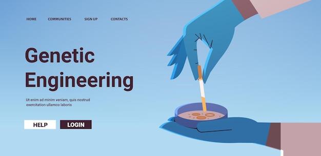 Scientifique en gants travaillant avec une boîte de pétri avec un chercheur de colonie de bactéries d'agar faisant une expérience chimique en laboratoire d'ingénierie moléculaire