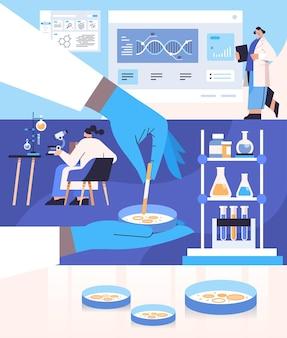 Scientifique travaillant avec une boîte de pétri avec des chercheurs de colonies de bactéries d'agar faisant une expérience chimique en ingénierie moléculaire de laboratoire