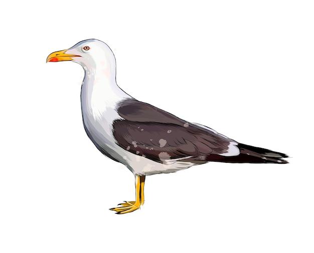 Seagull aquarelle sur blanc