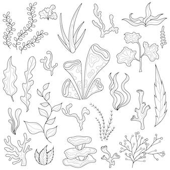 Seaweed.set.coloring livre antistress pour enfants et adultes. illustration isolée sur fond blanc. style zen-tangle. dessin en noir et blanc