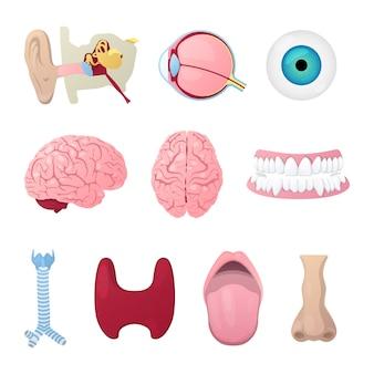 Sélection de l'anatomie humaine