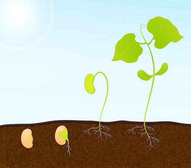 Semis de plantes vertes