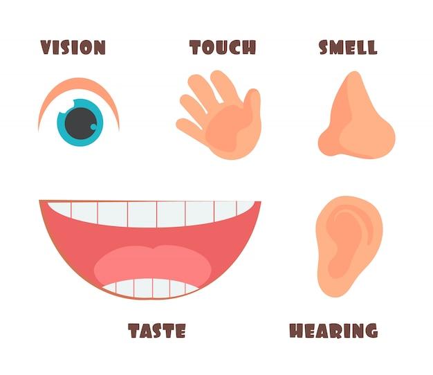 Sens humain icônes de dessin animé avec des symboles yeux, nez, oreilles, main et bouche