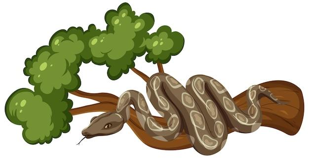 Serpent sur une branche isolé sur fond blanc