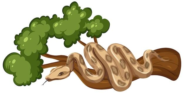 Serpent sur une branche isolée sur blanc
