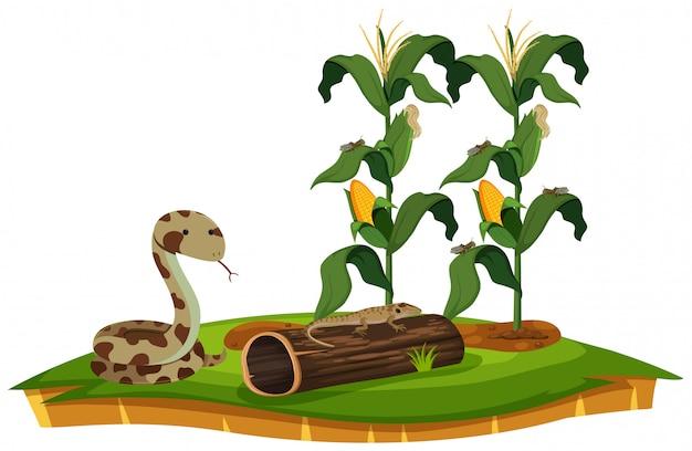 Un serpent et un lézard près d'un plant de maïs