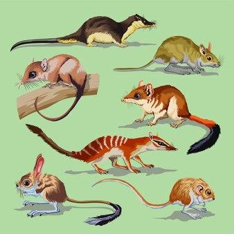 Sertie de différents rongeurs, collection d'animaux. opossum, jerboa, souris des champs, rat, cavalier, loutre.