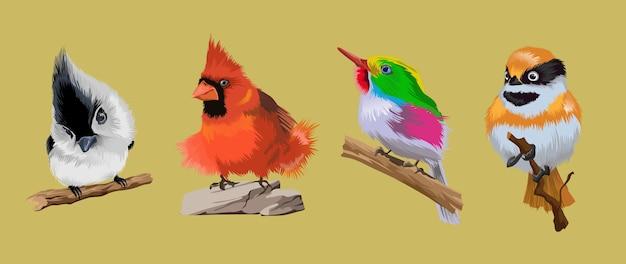Sertie de petits oiseaux rares tropicaux brillants