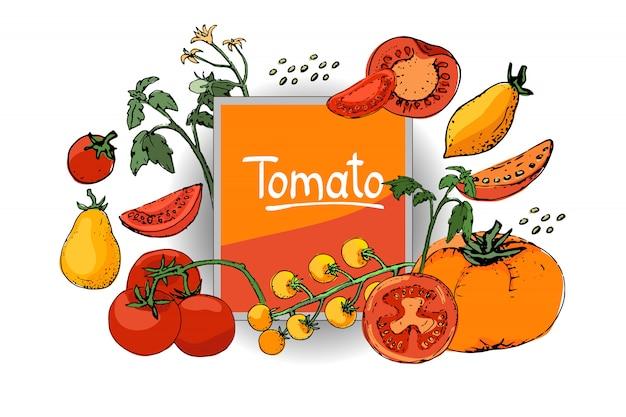 Sertie de tomates fraîches. fruits rouges, jaunes, orange, cimes vertes, fleurs jaunes et graines beiges.