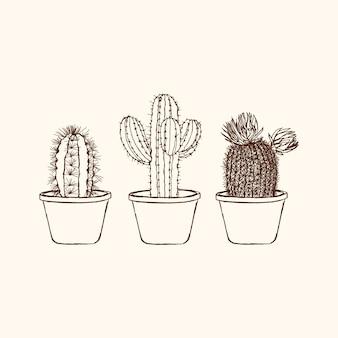Set cactus sketchy