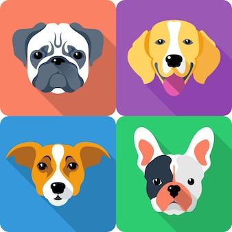 Set chien icône design plat pug et race beagle