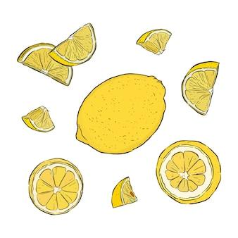 Set de citron ou citron dessiné à la main de vecteur.
