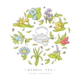 Set design logo modèles colorés et emblèmes - herbes et thés bio