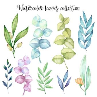 Set de feuilles d'aquarelle