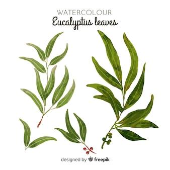 Set de feuilles d'eucalyptus aquarelle