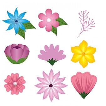 Set de fleurs et de plantes roses avec des feuilles de branches