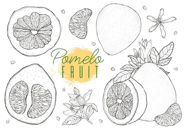 Set de fruits pomelo dessinés à la main de vecteur