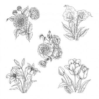 Set d'illustrations de fleurs