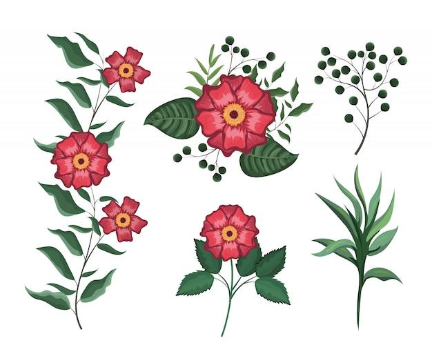 Set de plantes de fleurs exotiques avec des feuilles branches