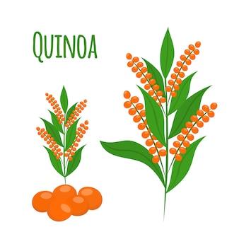 Set de quinoa