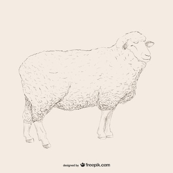 Sheep esquisse illustration
