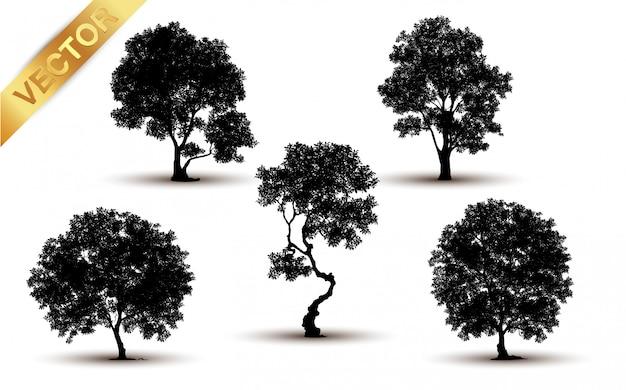Silhouette d'arbre isolé sur fond blanc.